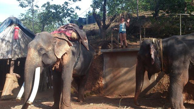 Алексей Кузнецов, Индия, слоны в ГОА
